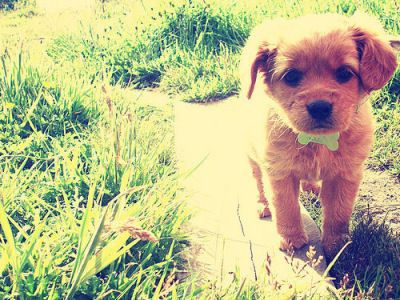 omg...: Bows Ties, Dogs, Little Puppies, Puppys, Bowties, Cutest Puppies, Adorable, Things, Animal
