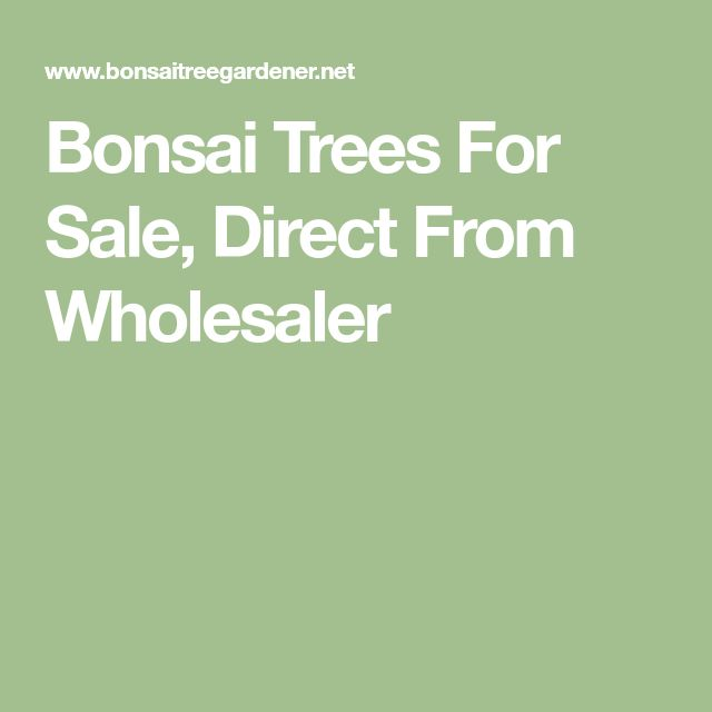 Bonsai Trees For Sale, Direct From Wholesaler