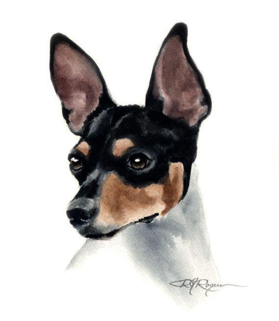 rat terrier watercolor painting <3