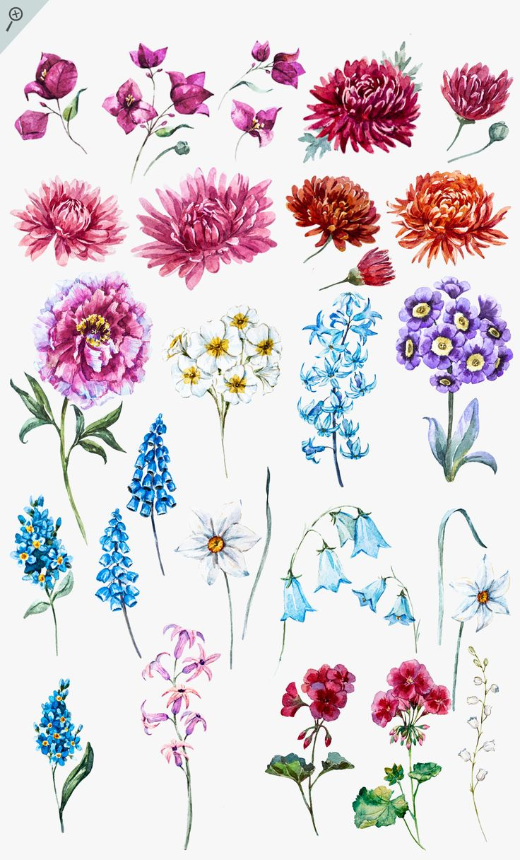 In this set, you'll get: Flowers: - Bougainvillaea - Geranium - Chrysanthemum - Hyacinth - Peony - Primrose - Blue bells - Narcissus - Lily of the valley All the flowers in a format : EPS,