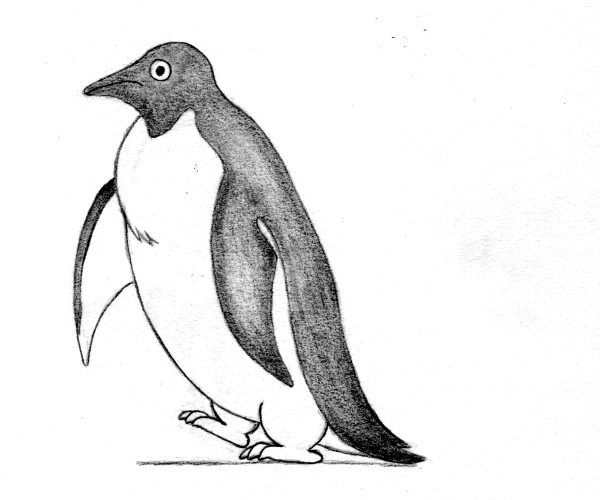 Pinguin - cum se deseneaza, desen pas cu pas.