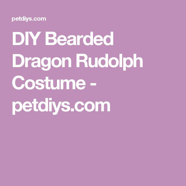 DIY Bearded Dragon Rudolph Costume - petdiys.com