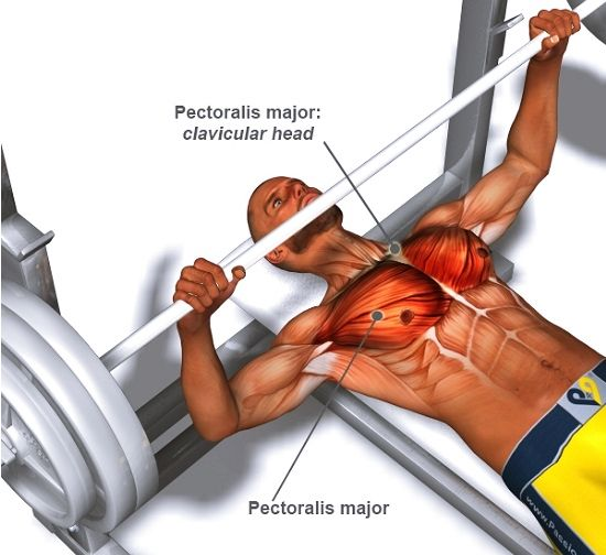 A Guide to Perfect Barbell Bench Press Technique for Stubborn Chest Muscles