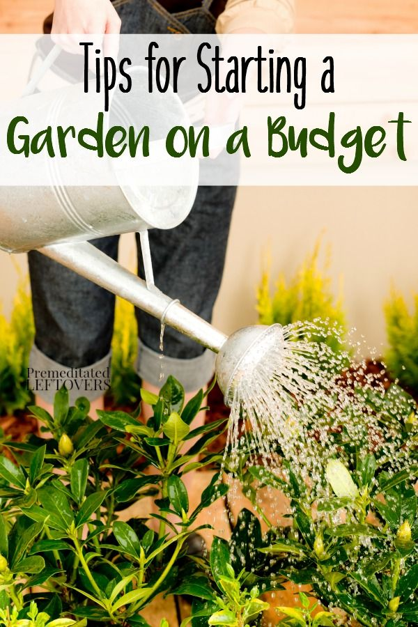 Frugal gardening tips how to start a garden on a budget you can start growing your own garden - Practical tips to make money from gardening ...