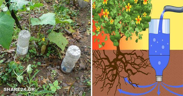 Η υδροδότηση με σταγόνες είναι κατάλληλη για πολλά καλλωπιστικά και κηπευτικά φυτά, πολυετή και μονοετή. Πολλά από αυτά προτιμούν την υγρασία απευθείας στις ρίζες τους, αντί να καταβρέχονται από πάνω, πράγμα που μπορεί να ενθαρρύνει μολύνσεις και μυκητολογικές ασθένειες στα φύλλα τους. Υπάρχουν αρκετές έτοιμες πατέντες έτοιμες στα φυτώρια, αλλά είναι πολύ εύκολο να φτιάξετε …