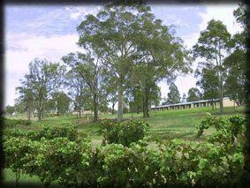 Vineyard Views Accommodation Hunter Valley