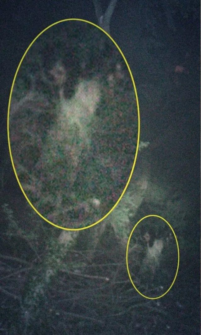 Hanna Butler from England snapped this creepy photograph during a ghost walk at Hessle Foreshore woods in East Riding, Yorkshire. Legend has it an orphaned girl haunts the woods, watching and waiting for her lost father.