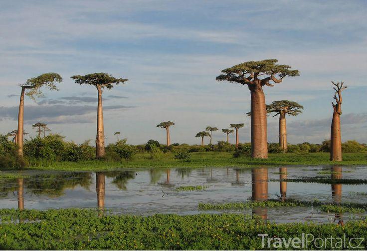 Krajina s baobaby.