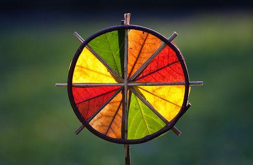 Autumn leaf color wheel