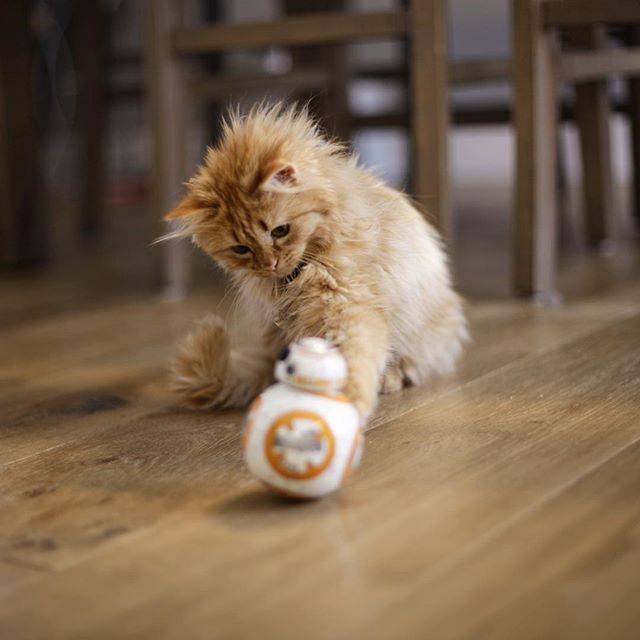 17 best images about feline frenzy on pinterest cats for Cat toys for when you re not home