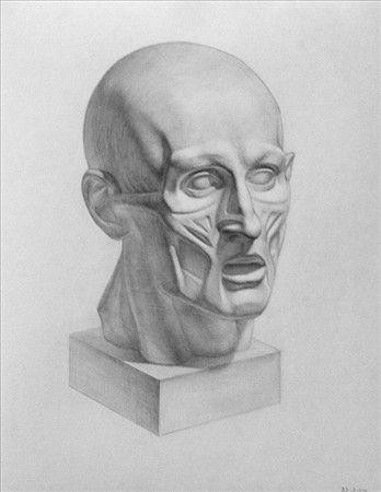 Muscle head cast, Russian Academy, 40x50cm graphite http://marniesart.blogspot.com