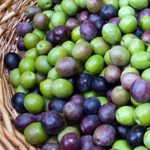 The Arbequina Olive Tree, which has a weeping-form, and green leaves with a dark appearance, originated in Spain. It features black fruit, which will ripen in Mid-Fall. It resists frost and climate change well, and will produce excellent tasting olives.    Check out our full selection at http://www.willisorchards.com/category/Olive+Trees