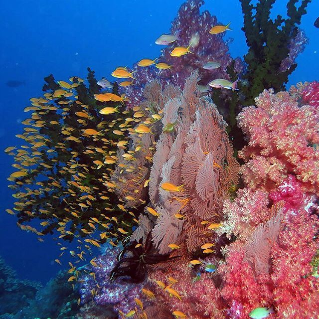 Underwater treasures! #VarietyCruises #Scuba Photo credits: @diveplanit