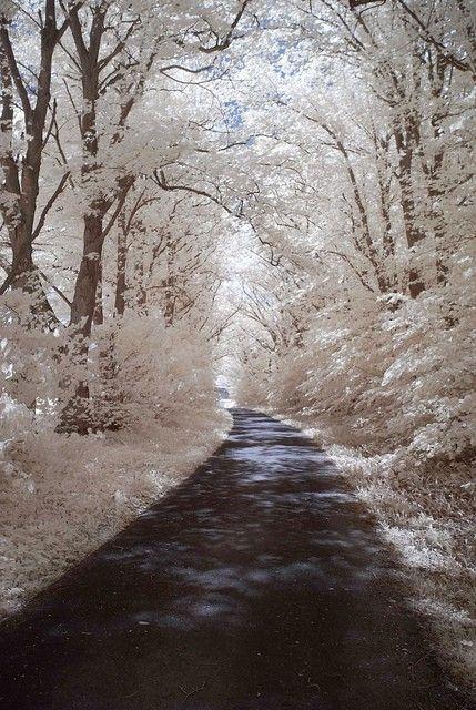 white trees,flowers