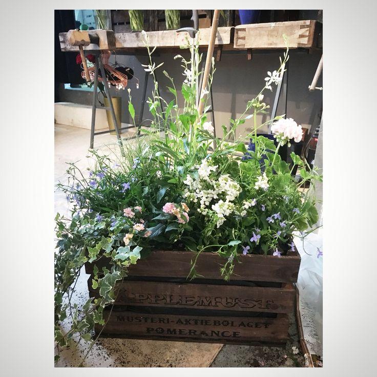 Taberna Flora Flowerbox