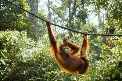 Borneo, Kuala Lumpur & Singapore