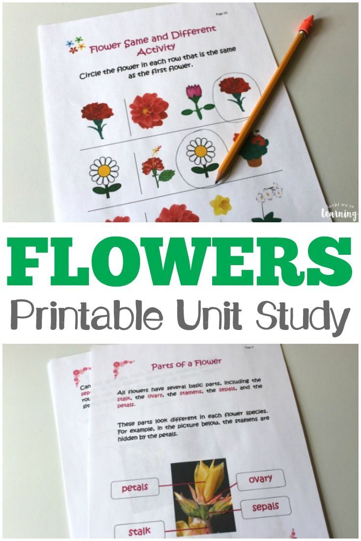 Get to know common flowers - just in time for spring - with this All About Flowers Printable Unit Study for Kids! #springactivities #activitiesforkids #printables