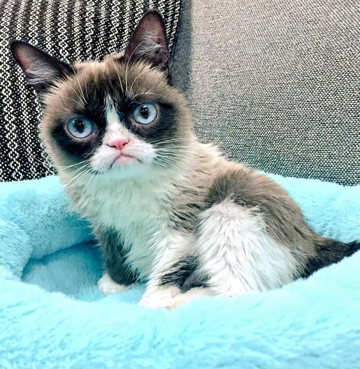 Backstage at the Nickelodeon #KCA Grumpy Cat waits to see if she wins #FavoriteAnimal! Tune in!