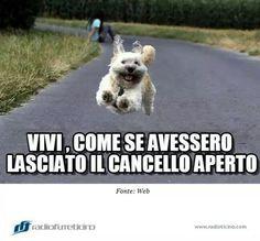 #vivi #cane #frasicani