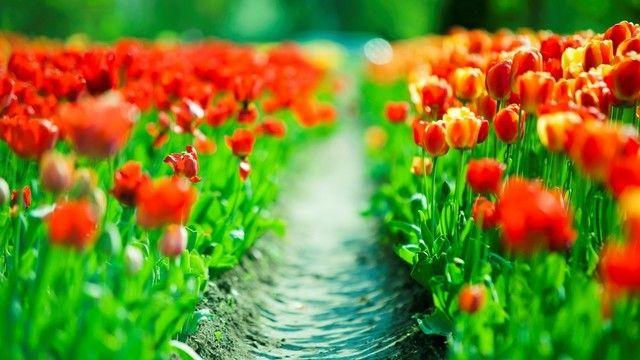 Beautiful Flowers Hd - 1985633