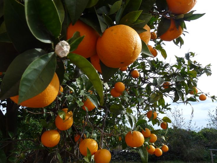 le arance...