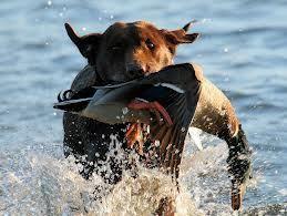 Av Köpeği Eğitimi | İzmir Köpek Eğitim Okulu