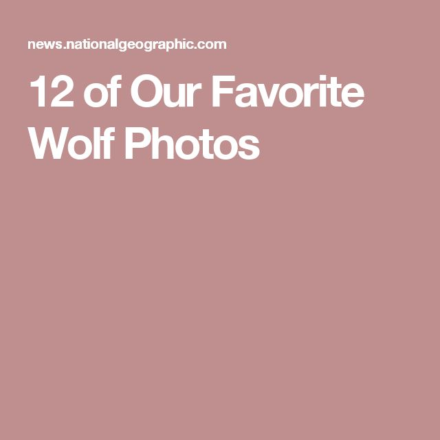 12 of Our Favorite Wolf Photos