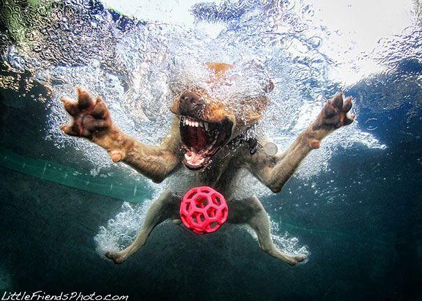 Underwater Dogs by Seth Casteel | Bored Panda