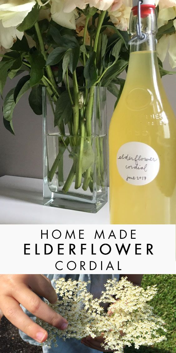 Homemade Elderflower Cordial -- Fun Foraging with a Tasty Treat ...