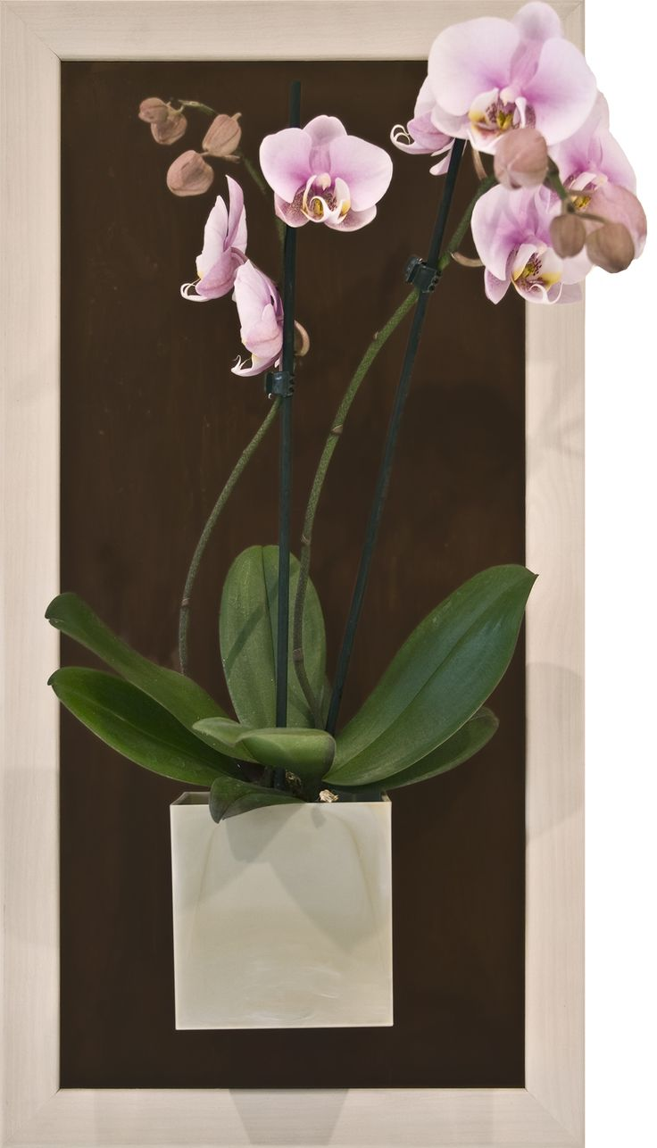 brown metall wall panel with creme magnetic plant pot and mini-orchide