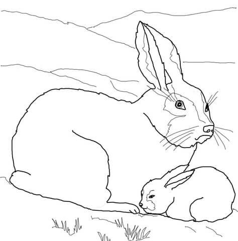 Arctic Hare Baby and Mother coloring page from Hares category. Select from 24114 printable crafts of cartoons, nature, animals, Bible and many more.
