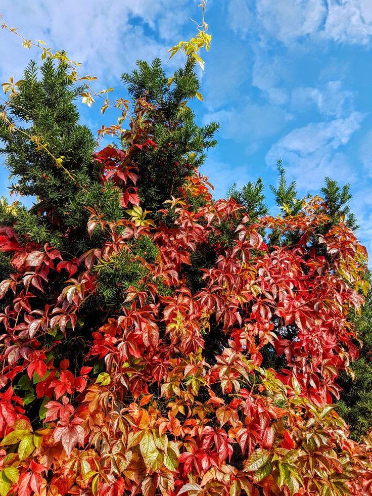 Autumn colirs 🍁🍁