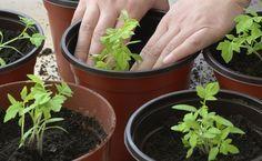 Controle as pragas com ingredientes que você tem em casa!