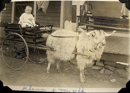 Старинные детские экипажи: коляски и повозки. - Интересное и забытое - быт и курьезы прошлых эпох.