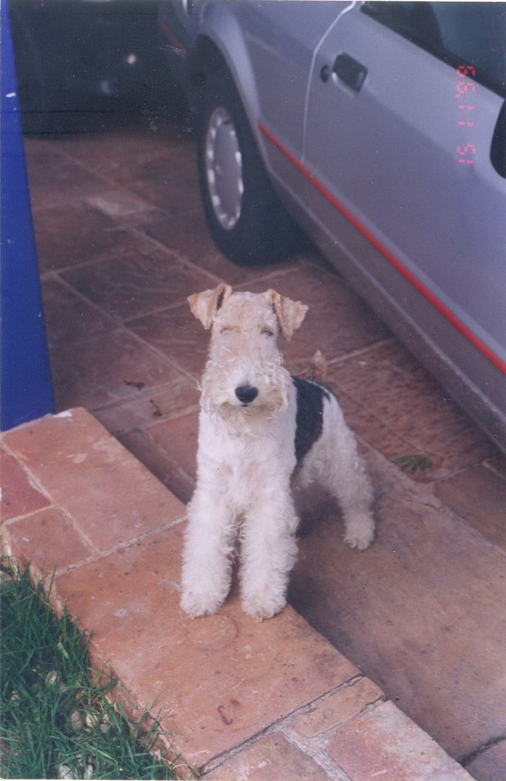 Beloved Baby Names 2015 Top Ten Baby Names: 6912 Best Images About LOVE WIRE FOX TERRIERS On Pinterest