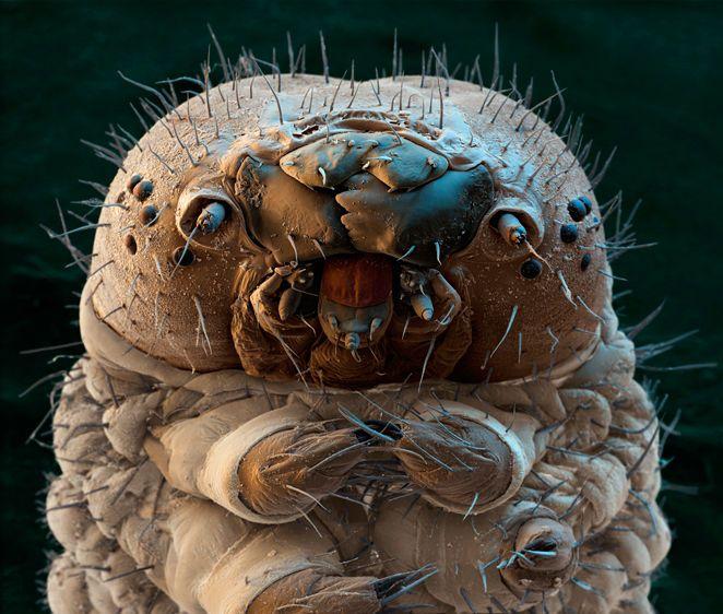 ✯ Silkworm Moth Caterpillar ✯