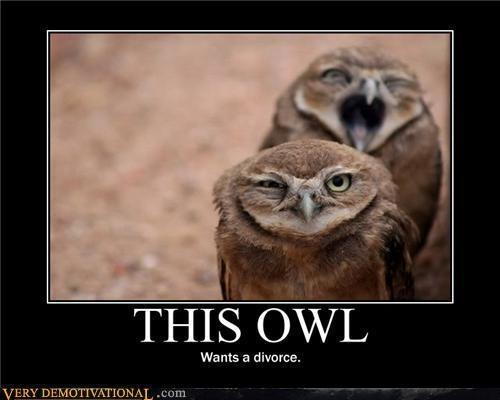 Owls make me laugh...