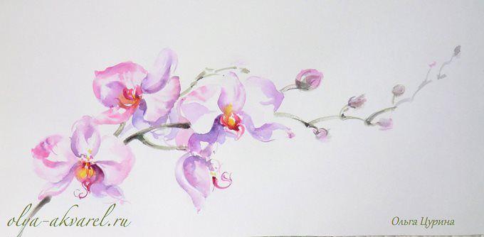 орхидея рисунок - Поиск в Google