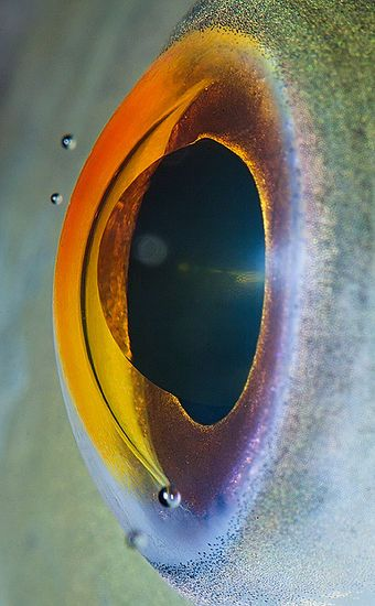 macro picture of a fish eye, makes you understand a fish eye lens