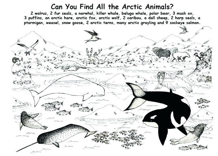 Antarctica Coloring Page Antarctic Animals Coloring Pages Pages Antarctic Animals Coloring Sheets Antarctic Animals C Polar Animals Arctic Animals Animal Books