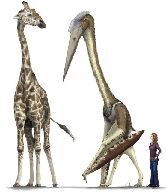"""KenBrasai: Newest """"giant azhdarchid compared to giraffe"""" pic by Mark Witton"""