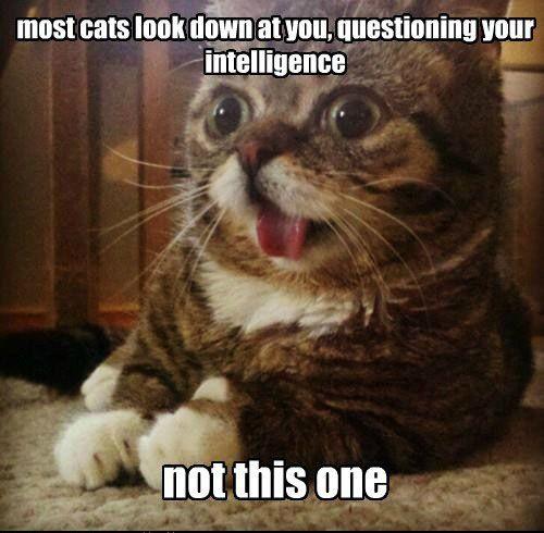 This is one dum cat