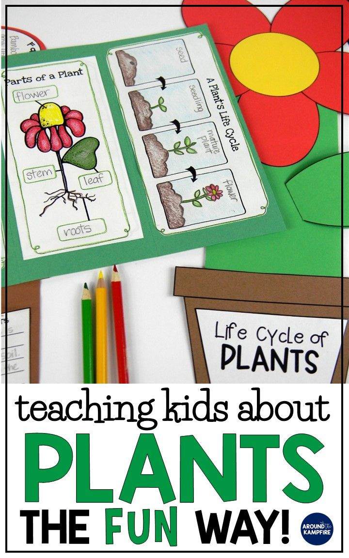 Plant Life Cycle Activities Fun Hands On Science For Kids Around The Kampfire Plants Life Cycle Activities Plant Activities Plants Kindergarten [ 1152 x 720 Pixel ]