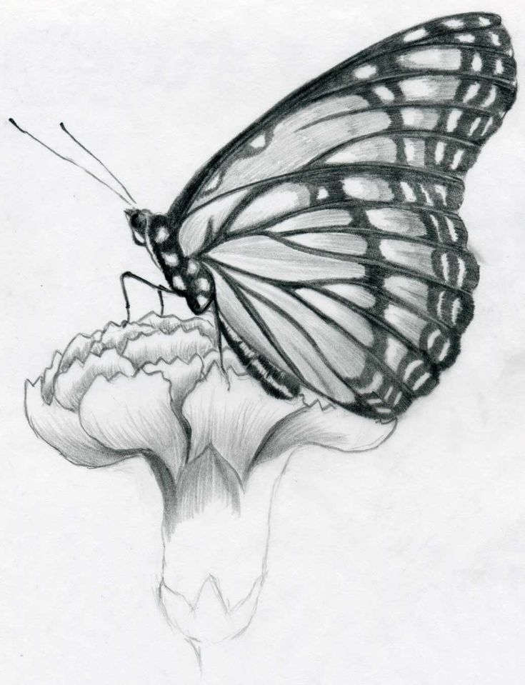Black+and+White+Pencil+Sketches | now observe and select first the darkest black parts on the wings and ...