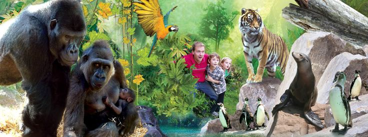 Chessington Zoo and Park. KT9 2NE