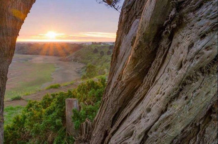 #Repost @sheridanaj_26  #towerhillreserve #sunset #tree #destinationwarrnambool #love3280 #hello_bluey #australia #aussiephotos #australiagram #victoria #exploreaustralia #exploringaustralia #warrnambool #unlimited_australia #ig_australia_ #hdr by destinationwarrnambool