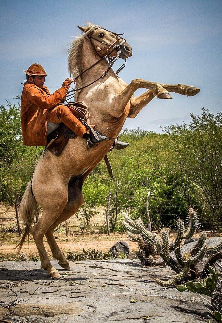 Curraleiro / Nordestino / Northeastern pony. Brazil. Photo ...