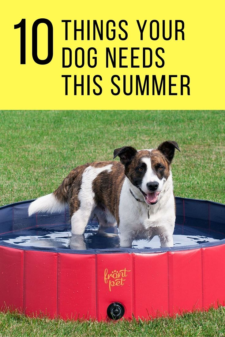 10 Summer Makeup Must Haves: 10 Things Your Dog Needs This Summer