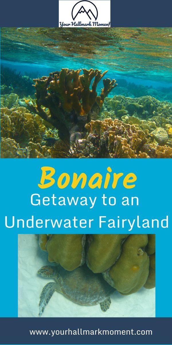 Caribbean Hurricane Belt : caribbean, hurricane, Unspoiled,, Uncrowded, Caribbean, Getaway, Snorkeling, Diving?, That's, Bonaire,, Which, Amazi…, Getaways,