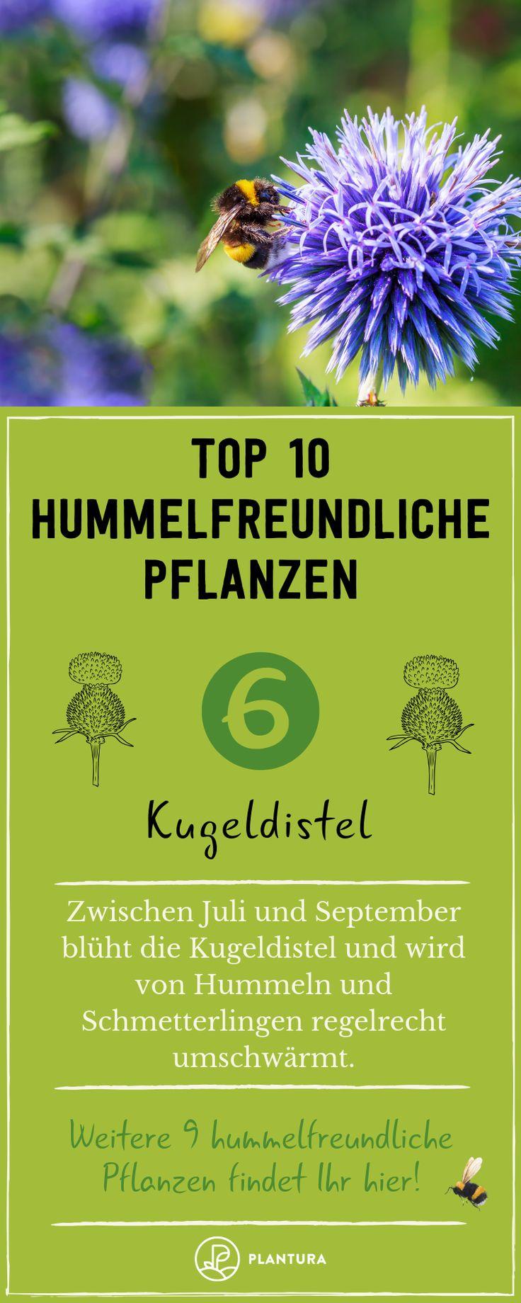 Hummelfreundliche Pflanzen: Unsere Top 10 für Ihren Garten
